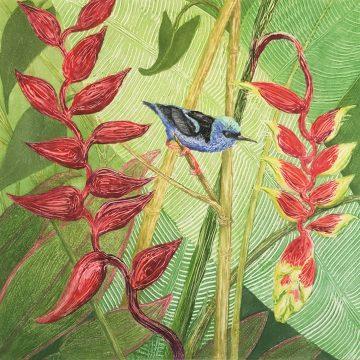 "Red-legged Honeycreeper by Anita Heckman, Monotype 12"" x 12"""