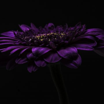 "Purple Flower by Barbara Brundage, Photography 15"" x 10"""