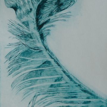 """Sweeping Feather by Janis O'Driscoll, Photopolymer Etching 16"""" x 11"""""""