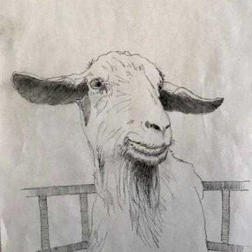 Goat by Scott Lindberg