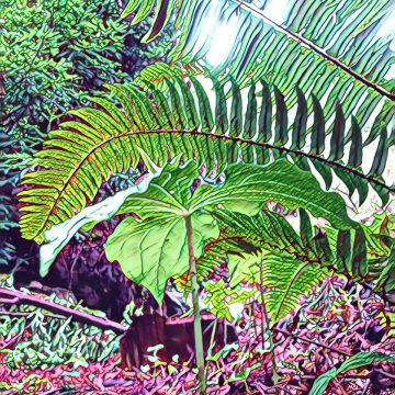 Trillium and Sword Ferns by Linda Cover