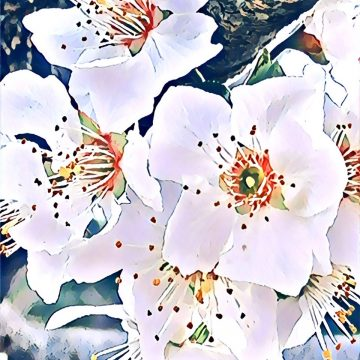 Wild Plum Flowers by Linda Cover