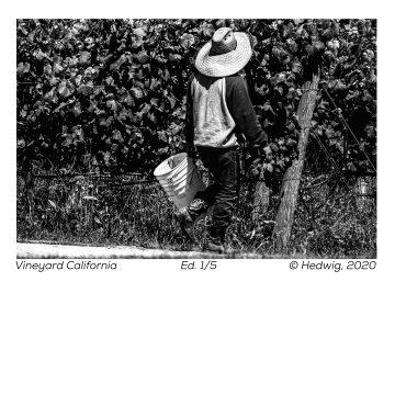 Vineyard California by Hedwig Heerschop, Hand-Pulled Aquatint Photo Etching