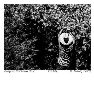 Vineyard California No. 2 by Hedwig Heerschop, Hand-Pulled Aquatint Photo Etching