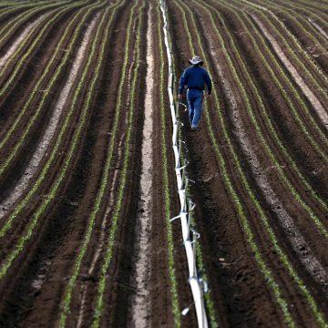 Row Crops by Shmuel Thaler, Photo Metal Print