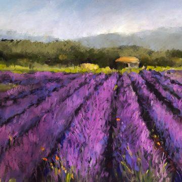 """Lavender Field by Joan Hellenthal, $600, Pastel, 16"""" x 18"""""""