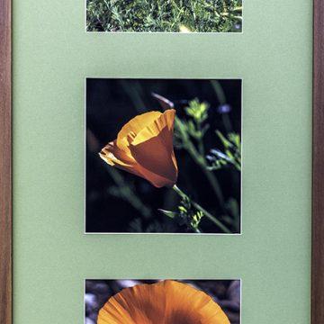 "California Gold by Marlene Mirassou, $250, Archival Digital Photograph with Handmade Redwood Frame, 36"" x 16"""